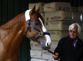 Trainer Bob Baffert walks Kentucky Derby champion Justify around the Pimlico barn ahead of Saturday's Preakness. (Image: Patrick Semansky/AP)