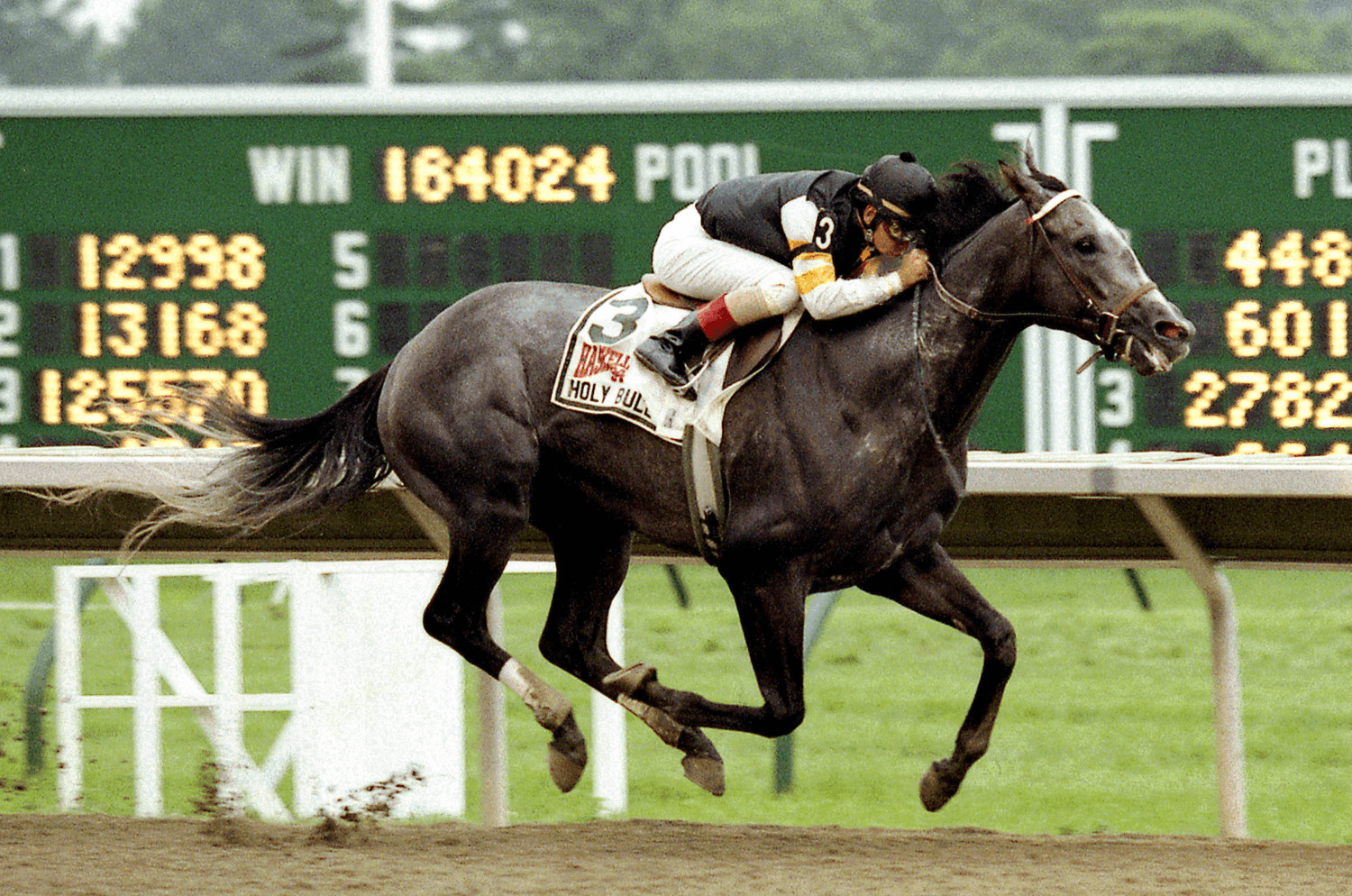 Holy Bull, 1994 Haskell Stakes