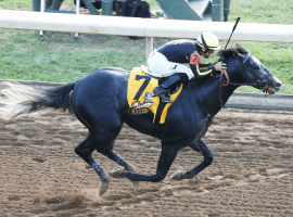 Knicks Go, 5/2 on the morning line, is looking to rebound at Tampa Bay Downs. (Image: Keeneland/Coady Photography)
