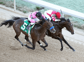 Omaha Beach-red cap-slugging it out with Game Winner at Oaklawn Park. (Image: Coady Photography)
