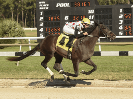 Win Win Win expected favorite in Tampa Bay Derby. (Image: SV Photography)