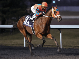 Hot favorite Somelikeithotbrown under Tyler Gaffalione flashing home an easy winner in Kentucky Derby prep at Turfway Park. Image: (Coady Photography/Turfway Park)