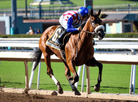 Bellafina a sparkling winner of the Chandelier Stakes Sept. 29 at Santa Anita. (Image: Breeders' Cup)