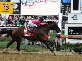 """""""Wow"""" horse War of Will scampers home a winner in 144th Preakness Stakes. (image:AP)"""