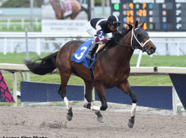 Stanley Hough's Global Campaign, an easy winner in at Gulfstream earlier this year heading to Buckeye State Saturday. (Image: Lauren King)