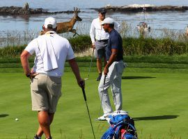 Tiger Woods gets in some practice at the US Open on Monday, and is joined by a buck who decided to wander on the course. (Image: USA Today Sports)