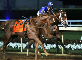 Mr. Money and rider Gabriel Saez have company in the form of a loose horse at the finish of Saturday's Indian Derby (Image: Coady Photography)
