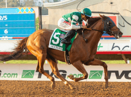 There's no standout in this year's Pacific Classic like last year when Acclerate laid waste to his overmatched competitors. (Image: Lanes End)
