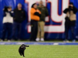 A black cat ran on to the field at MetLife Stadium during the second quarter of the Dallas Cowboys and NY Giants game.  (Image: Emilee Chinn/Getty)
