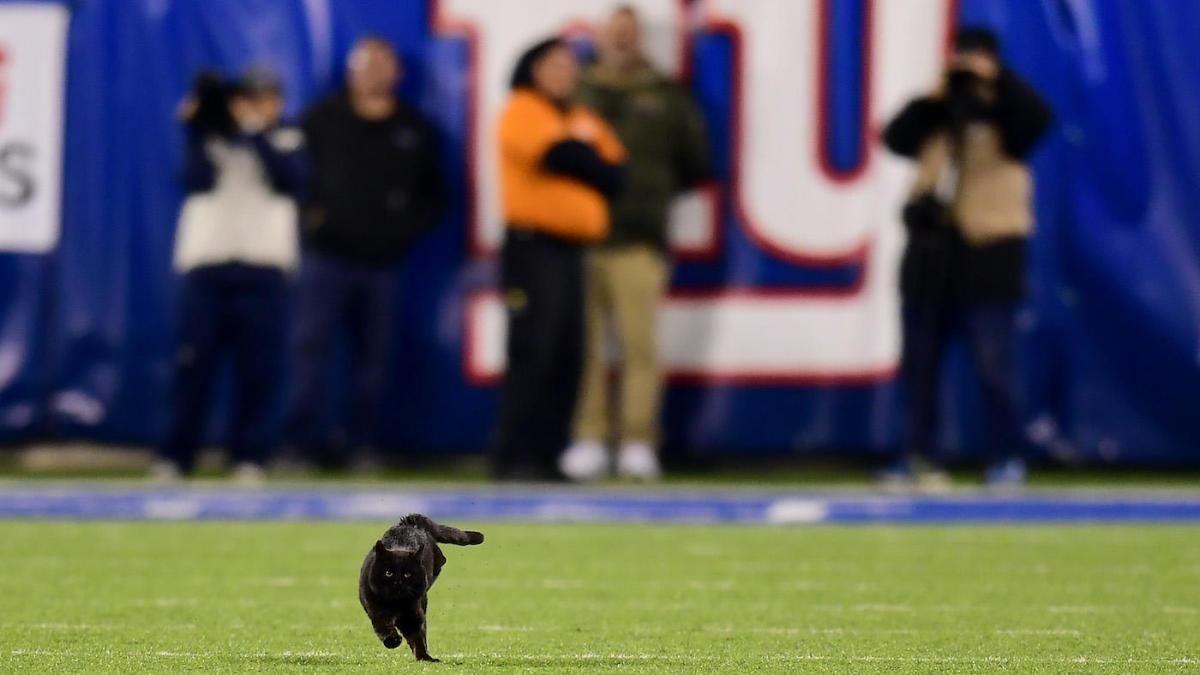 Black cat Monday Night Football NY Giants Dallas Cowboys bad beat