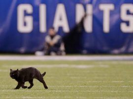 A stray black cat ran onto the field at MetLife Stadium during the Dallas Cowboys and NY Giants game on Monday Night Football on November 4, 2019. (Image: Adam Hunger/AP)