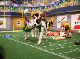 Will the Underdogs Bark in the Puppy Bowl?