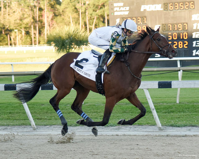 Sole Volante at 2020 Sam F Davis Stakes