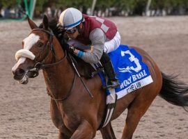 Tiz the Law won the Holy Bull Stakes last week, and with that jumped out to become the odds-on favorite for winning the Kentucky Derby. (Image: Eclipse Sportswire)