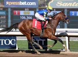 The 8/5 favorite for the San Felipe Stakes, undefeated Authentic isn't a drama-free runner. He won the Sham by 7 3/4 lengths despite inexplicably breaking for the rail twice down the stretch. (Image: OG News)