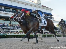 Chance It, seen here at Gulfstream Park beating As Seen On Tv by a nose in the Mucho Macho Man Stakes, has won four of his last six races. (Image: Lauren King)