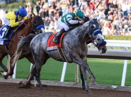 At age 7, Gift Box is one of the most dominant older horses in the country. He'll try to be the fifth horse to win multiple Santa Anita Handicaps Saturday. (Image: OG News)