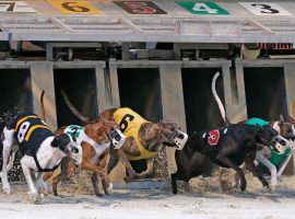 Greyhound racing was already slated to end in Florida this year, but tracks like the Daytona Beach Racing and Card Club are closing early due to the coronavirus pandemic. (Image: Nigel Cook/Daytona Beach News-Journal)