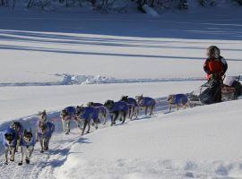 2019 Iditarod champ, Pete Kaiser, mushing toward the Nikolai checkpoint on the 2020 Iditarod. (Image: Zachariah Hughes/Alaska Public Media)