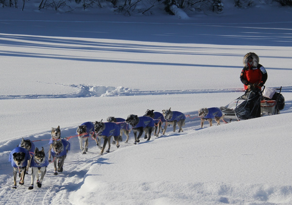 Peter Kaiser Jessie Royer 2020 Iditarod Ruby Alaska sled dog