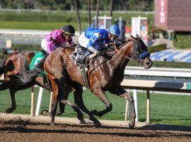 With this victory at last month's Robert B. Lewis, Thousand Words is 3-for-3. Can the 2/1 second choice extend trainer Bob Baffert's success at the San Felipe Saturday? (Image: OG News)