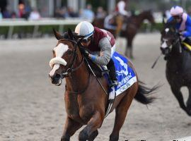 Tiz the Law overtook Ete Indien in earely stretch to win the Holy Bull Stakes nearly two months ago. The two renew their rivalry Saturday in the Florida Derby. (Image: Ryan Thompson)