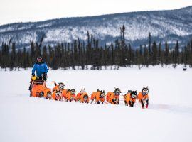 Thomas Waerner and his dogs arrive at Cripple, Alaska checkpoint during the 2020 Iditarod (Image: Loren Holmes/ADN)