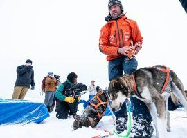 Musher Thomas Waerner and his dogs rest at the Unalakeet, Alaska checkpoint during the 2020 Iditarod. (Image: Lauren Holmes/ADN)