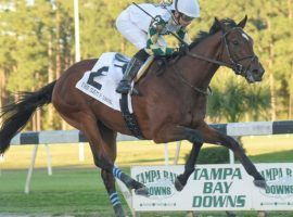 Sole Volante is a legitimate favorite in the Tampa Bay Derby. But against rival Chance It, can he close like he did here in winning the Sam F. Davis Stakes? (Image: SV Photography/Tampa Bay Downs)