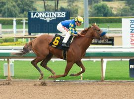 Charlatan, seen here winning a March allowance by 10 1/4 lengths at Santa Anita, enters his first stakes race Saturday. He's in the Arkansas Derby's first division. (Image: Benoit Photo)