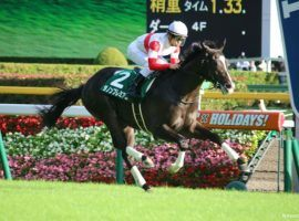 Japanese colt Danon Premium owns six victories in 10 races. He is the favorite for the Queen Elizabeth Stakes, the Day 2 headliner at The Championships in Sydney. (Image: N. Kouno)