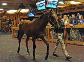The annual Fasig-Tipton Saratoga Selected Yearling Sale often brings in more than $40 million. Due to the coronavirus. it was canceled and merged with two other sales this year. (Image: Donna Abbott-Vlahos)