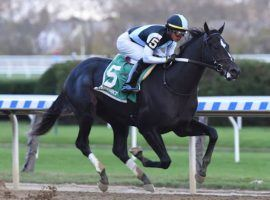 Independence Hall, seen dismantling the Nashua Stakes field by 12 1/2 lengths last fall, will focus on one-turn races. He won't compete in any more Kentucky Derby preps. (Image: Coglianese Photos/Chelsea Durand)