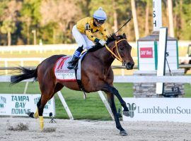 Owned by former major-league All-Star Victor Martinez, King Guillermo became an overnight sensation with his victory in the Tampa Bay Derby. (Image: Getty)