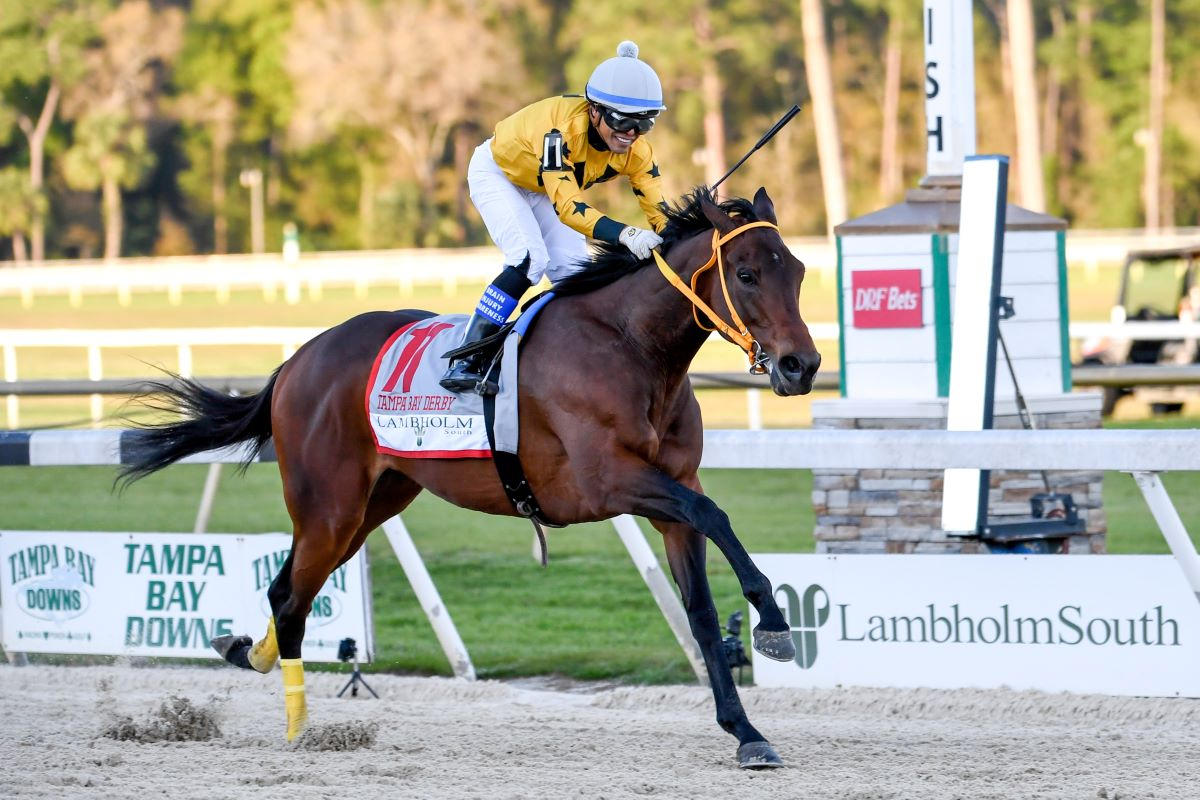 King Guillermo-Tampa Bay Derby