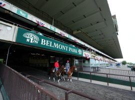 NYRA instituted new safety and claiming regulations the organization said should create a safer, more equitable track for horses. (Image: Brad Penner/USA Today)
