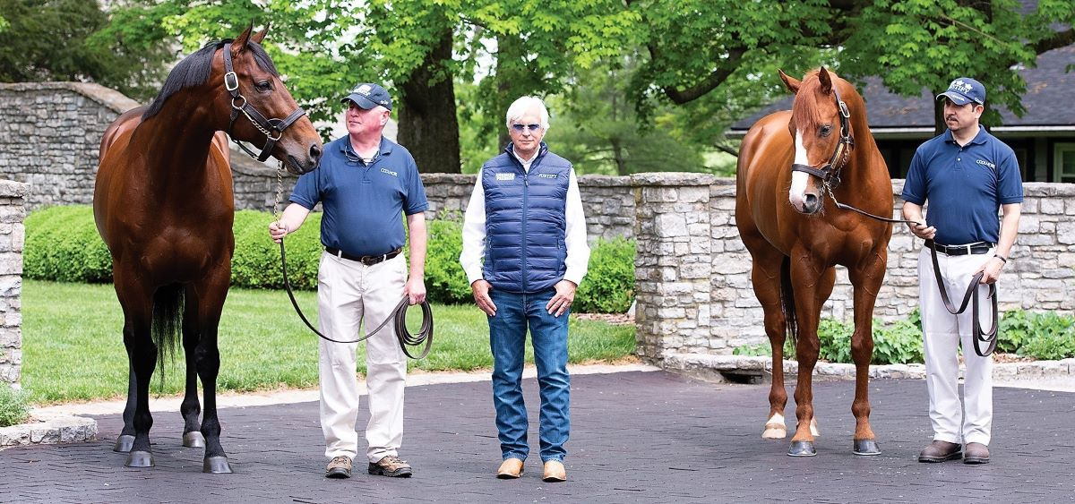 Tiz the Law-Coolmore