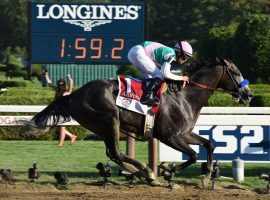 Arrogate became the first horse in Saratoga history to break 2 minutes for 1 1/4 miles when he won the 2016 Travers Stakes. The richest horse in terms of on-track earnings was euthanized Tuesday. He was 7. (Image: Peter Barber/Daily Gazette)