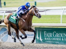 By My Standards won his first stakes race, last year's Louisiana Derby. He faces his biggest challenge to date against tough, seasoned Tom's d'Etat in the Stephen Foster. (Image: Eclipse Sportswire)