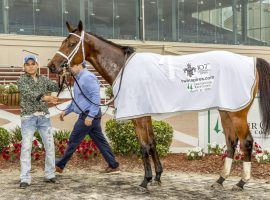 Wells Bayou will have plenty of time to cool down now. The Louisiana Derby winner and former Kentucky Derby contender is out with bone bruising. (Image: Lou Hodges Jr./Hodges Photography