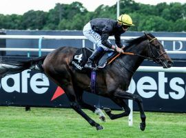 With Frankie Dettori in the irons, English King brings all the advantages of royalty into Saturday's Epsom Derby. All, save a favorable starting stall. (Image: Megan Ridgwell)