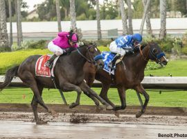 Thousand Words (right) outdueled Anneau d'Or in last fall's Los Alamitos Futurity. The two slumping horses duel again in Saturday's Los Alamitos Derby. (Image: Benoit Photo)