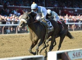 Even in the mud, Tom's d'Etat finds Saratoga to his liking. He's 3-for-4 at the Spa, seeking his fifth consecutive win in Saturday's Whitney Stakes. (Image: Elsa Loreul/NYRA)