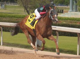 Whitmore won his third Count Fleet Sprint Handicap in four years in April. He goes for his 15th career win and second Grade 1 in Saturday's Alfred Vanderbilt Stakes. (Image: Richard Rasmussen/Hot Springs Sentinel-Record)
