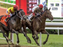 Caracaro (left) finished second to Country Grammer in the Peter Pan Stakes in July. Caracaro was scratched from the Kentucky Derby Friday after suffering apparent ligament damage during a workout. (Image: Skip Dickstein/Times Union)