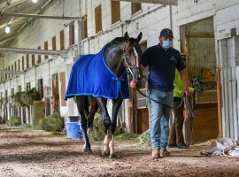 Kentucky Derby hopeful Max Player is on the move, from Linda Rice's New York barn to Steve Asmussen's Kentucky barn. (Image: Skip Dickstein)