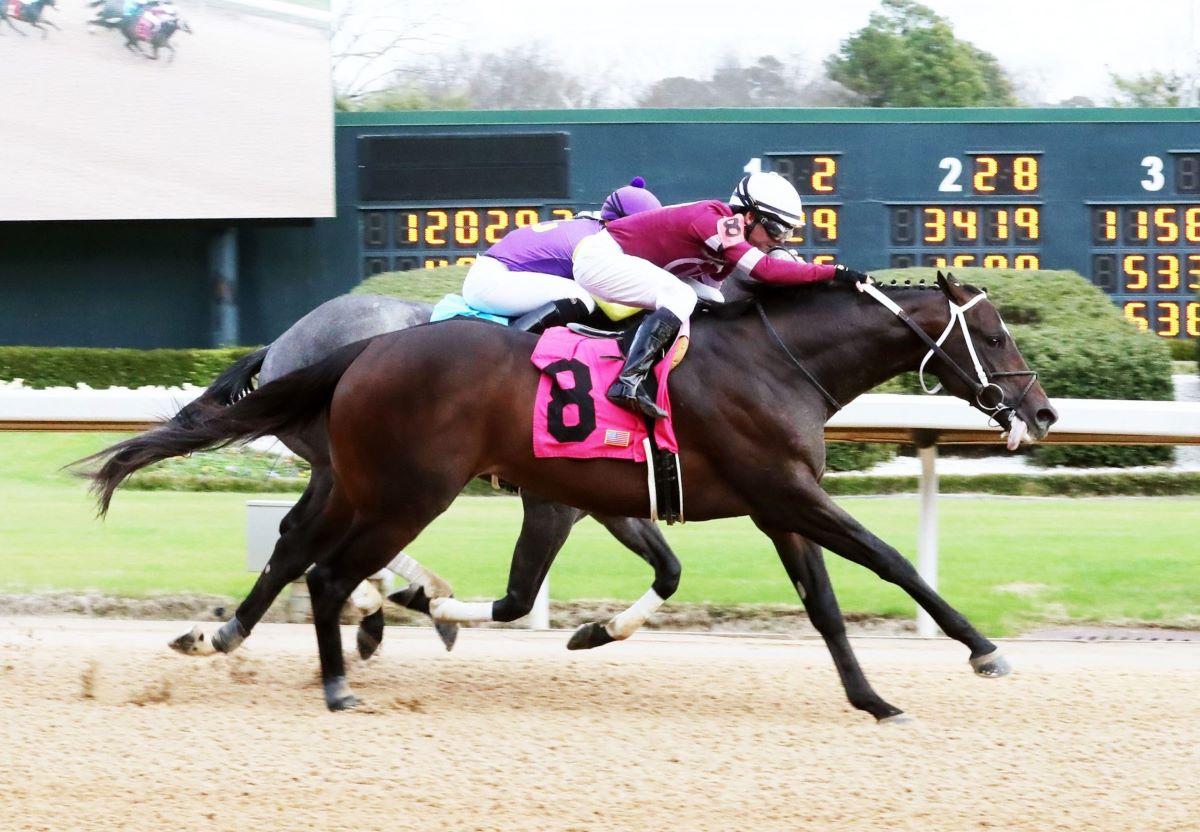Pneumatic-Pegasus Stakes