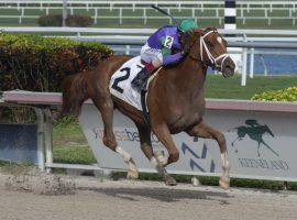 Spice is Nice, seen her breaking her maiden at Aqueduct last year, has the pedigree to run 1 1/4 miles. But does she have the class to run with standouts such as Swiss Skydiver? (Image: Ryan Thompson/Coglianese Photo)