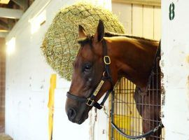 """King Guillermo will miss the Kentucky Derby due to a fever. Trainer Juan Carlos Avila tweeted, """"He is happy and we are very sad but proud to take care of him."""" (Image: Churchill Downs)"""
