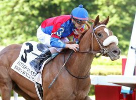 Fillies, colts, it really doesn't matter who Swiss Skydiver runs against. Trainer Kenny McPeek is considering entering the filly in the Preakness Stakes. (Image: Coady Photography)